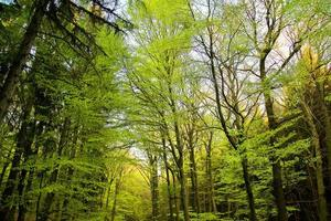 Trees in Nature in Park photo