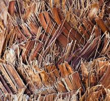 tronco de corteza de madera de árbol natural foto