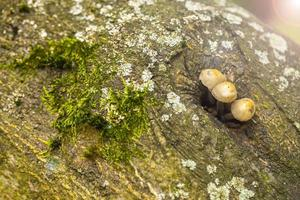 Natural Fungus Mushroom in Green Nature photo