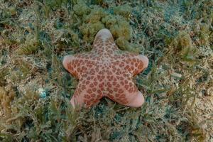 Estrella de mar en el fondo del mar rojo, Eilat, Israel foto