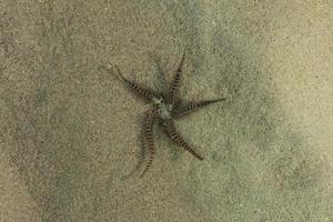 Starfish On the seabed in the Red Sea, Eilat Israel photo