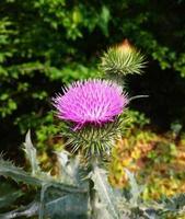 Nature landscape flower photo