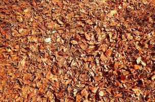 Outumn leaves on a ground photo