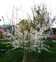Tree with flowers photo