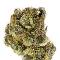 Isolated photo of marijuana