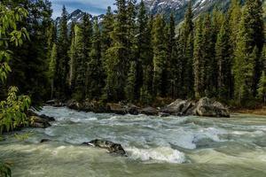 borde del camino. parque nacional kootney. columbia británica, canadá. foto