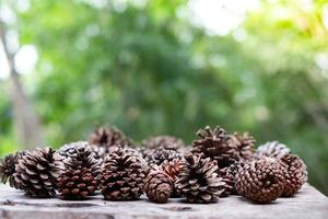 pine cone dry on white background photo