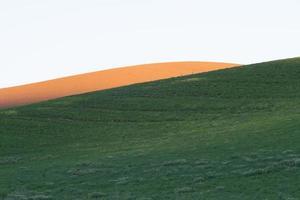 campos de cultivo de trigo mágico en palouse washington foto
