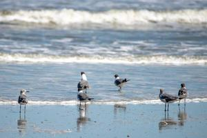 nature around hunting island state park beach in south carolina photo