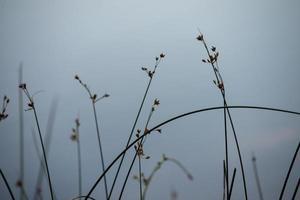 Plantas verdes abstractas por lago remoto foto