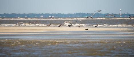 Pelícanos abstractos en vuelo en la playa del océano Atlántico foto