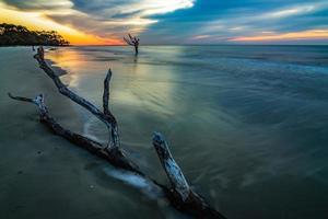 beautiful nature on hunting island south carolina photo
