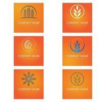 Luxury Golden Grain Weath Rice Logo Design Vector