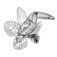 Illustration of a tropical bird like a Toucan. vector