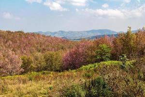 el hermoso campo de flores rosadas en el valle de tailandia foto