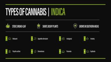 Black information poster of Types of cannabis with infographic. Indica vector