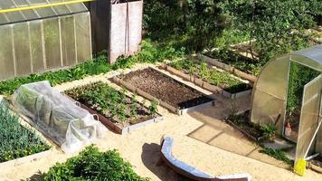 jardines con verduras en su cabaña de verano. plantaciones de hortalizas foto