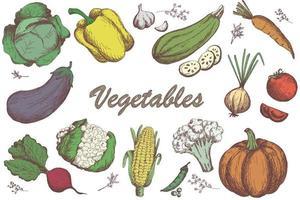 Sketch vegetables set. garden vegetable collection vector