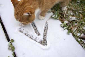 An arrow drawn in the snow. Go forward to goal icon. Ginger tabby cat photo