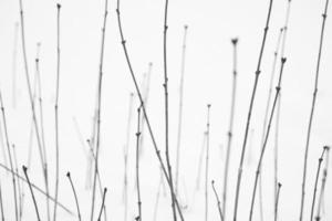 Hermoso patrón de línea de tallo de planta arbusto en un campo de nieve de invierno frío foto