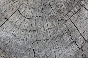 grey texture of tree stump photo