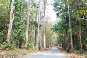 Fondo de primer plano de paisaje de camino forestal foto
