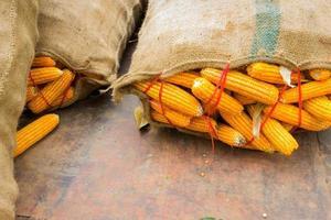 Primer plano de maíz amarillo seco en gran saco con copyspace foto