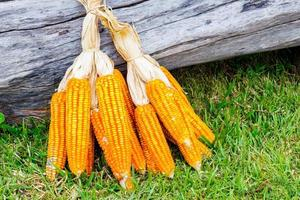 mazorca de maíz foto