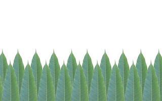 Marco de hojas verdes aislado sobre fondo blanco. foto