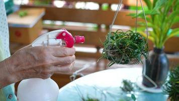 donna anziana che innaffia la pianta a casa giardino video
