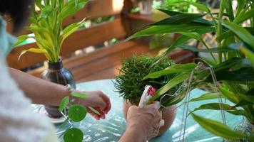 senior woman watering plant at home. gardening concept video