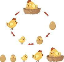 cycle chicken vector