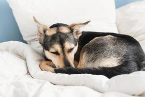 lindo perro acostado en la cama durmiendo foto