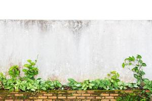 grunge wall isolated photo