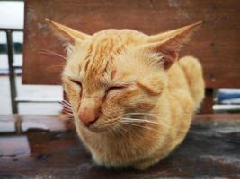 primer plano gato naranja durmiendo en una silla en Tailandia. foto