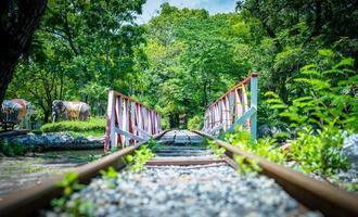 vías del tren a través del parque. foto
