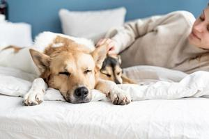 Happy young woman lying in the bed with her dogs photo