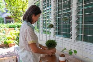 senior asian woman growing small plant in pot to decorate house photo