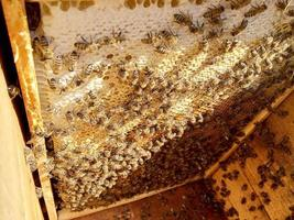 panal de abejas lleno de miel dorada foto