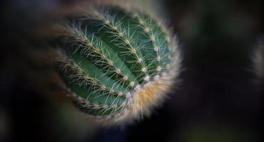 top view closeup cactus. photo