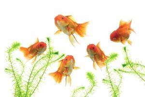 peces de colores nadando sobre fondo blanco foto