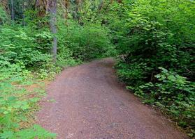 Forest Road by the South Umpqua River OR photo