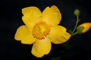flor de cerca floreciente fondo botánico foto