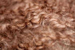 Perro de pelo rizado marrón cerrar lagotto romagnolo resumen antecedentes foto