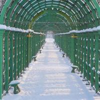 Arco de enrejado verde en Alley Summer Garden Park en San Petersburgo. foto
