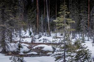 borde del camino. parque nacional yoho, columbia británica, canadá foto