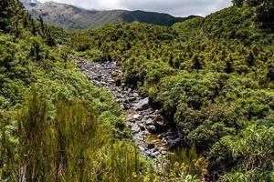 bosque de hadas, parque nacional egmont, taranaki, nueva zelanda foto