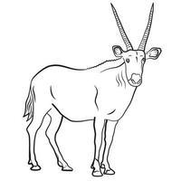african antelope illustration vector