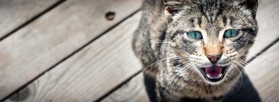 dulce animal mascota gato foto