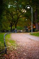 Dry Autumn Leaves in Nature photo